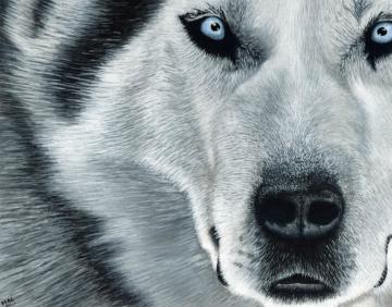 melchambers-husky